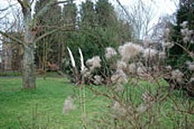The Botanic Garden, Cambridge